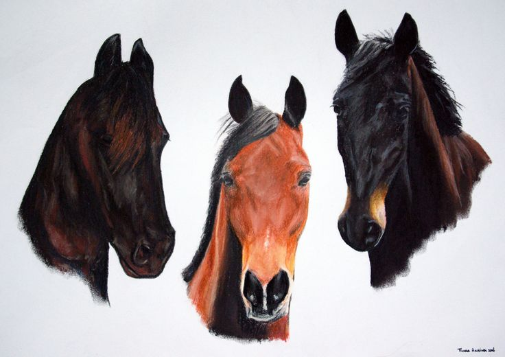 Commissioned. 3 Very dear horse friends.