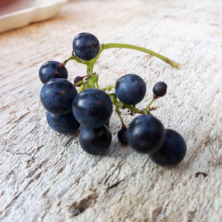 Eigen druifjes uit eigen tuin ..... en we zitten heerlijk buiten met een glas wijn #wine #vin #vino #druif #druifjes #garden #jardin #home #steenschotten #table #tafel #tuintafel