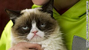 This is the feline face that's creating a stir online -- and live in Austin, Texas too. ¸.•♥•.¸¸¸ツ  March  12, 2013.  Grumpy Cat, an 11-month-old mixed breed whose real name is Tardar Sauce...   ¸.•♥•.¸¸¸.•♥•.¸¸¸.•♥•.¸¸¸.•♥•.¸¸¸ツ