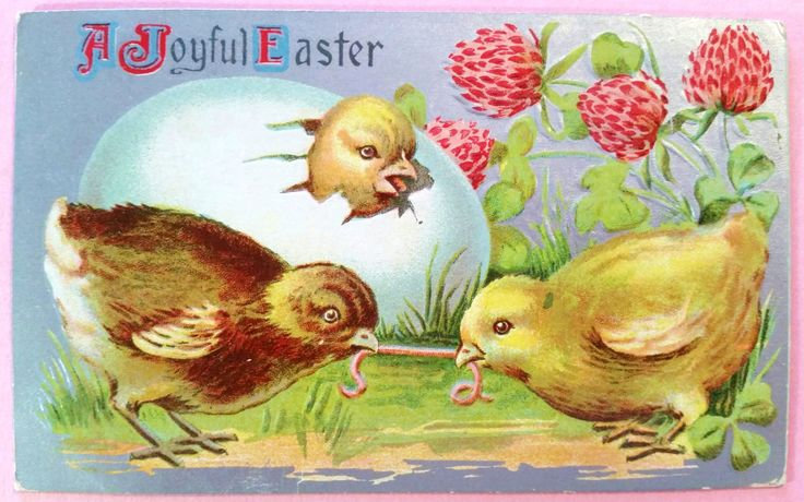 Victorian Easter Postcard 1910 Antique Post Card Chicks Fighting Over Worm Chick Hatching from Egg Clover Flowers Embossed Silver Background by DimeStoreDarlings on Etsy