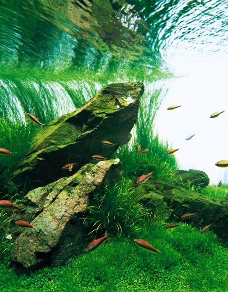 Image by The Green Machine | Nature aquarium, Aquascape ...