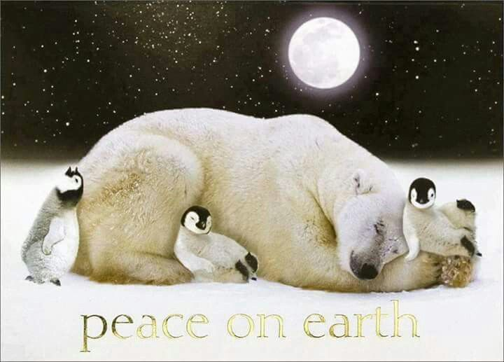 36 best Peace On Earth..... images on Pinterest | Peace on earth ...