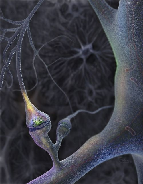 An illustration titled Neuron preparing to fire by Graham Johnson, an American scientific imagery specialist.  This illustration won the Science and Engineering Visualization Challenge in 2005, sponsored by both Science magazine and the National Science Foundation.