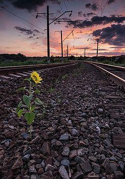 The vicissitudes of life by Natalya Antropova #NatalyaAntropovaFineArtPhotography#ArtDecor#HomeDecor#Travel#sunflower