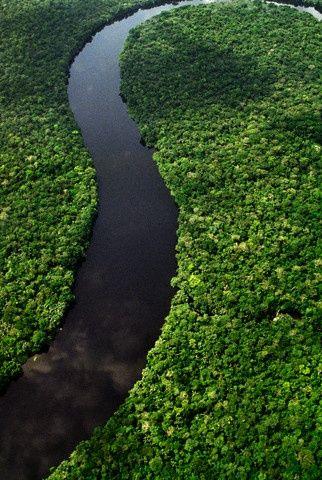 River winding through rainforest, Democratic Republic of Congo..