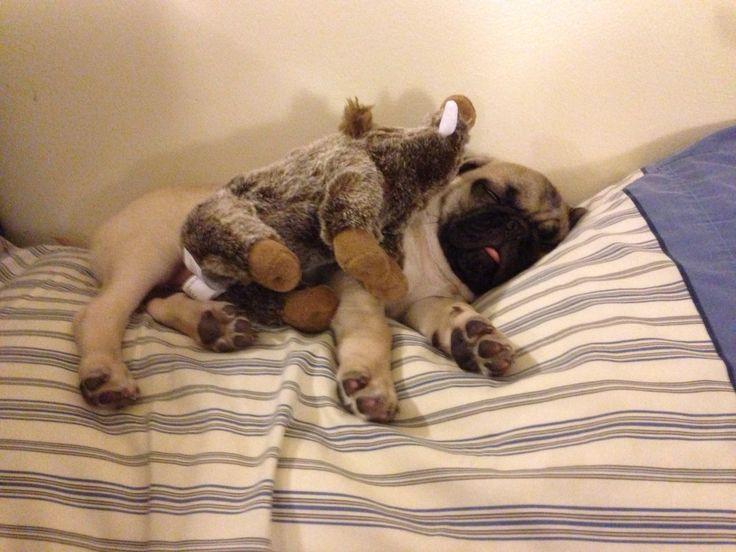 A pugs best friend