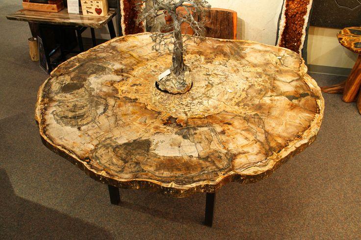 Petrified Wood Table Xl Metasequoia Dawn Redwood