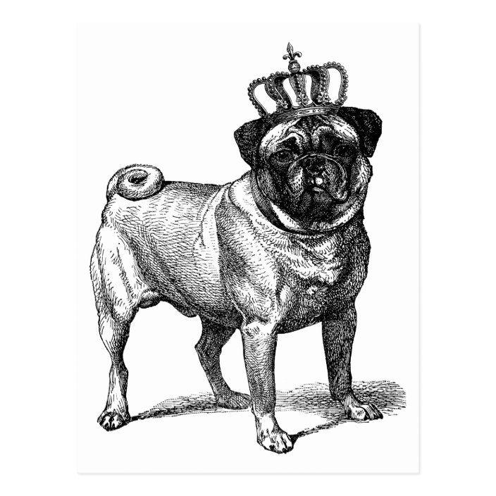 Vintage Pug With Crown Illustration Altered Art Postcard Zazzle Com In 2021 Crown Illustration Dog Clip Art Pug Illustration