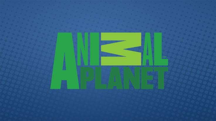 Silahkan baca artikel ASSISTIR ANIMAL PLANET AO VIVO 24 HORAS ini selengkapnya di Tv Online