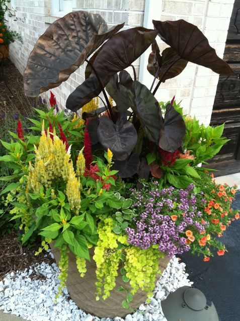 66 Best Images About Canna Planters On Pinterest