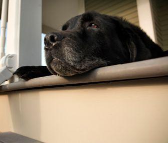 Common Health Conditions in Senior Dogs. Visit www.karen-steve.myflpbiz.com for more information.