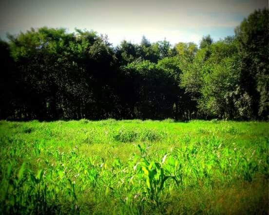 Verde ippovia