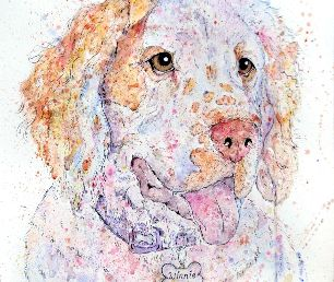 Winnie the sweet Clumber Spaniel, I loved painting her :)  #clumberspaniel #dogart #colourfuldogart #petportraits #spaniels #uniqueart #dogportrait