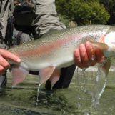 Destinos de pesca: Trucha arcoíris en Nueva Zelanda