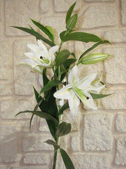 17 best images about fleurs on pinterest cascade bouquet for Fleurs amaryllis bouquet