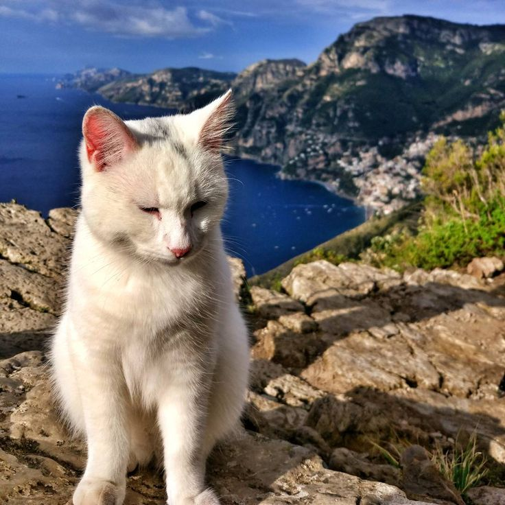 Even cats enjoy the path of gods in the Amalfi Coast