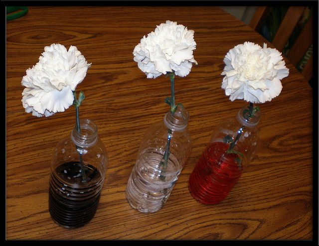 I used this as a science experiment when I was student teaching in first grade. I used different colored food dye, water, and empty container/water bottle, and white carnation flowers. I put the dye in the water first then put the flowers down in the water. I let the students predict on the first day what they thought the dye would do to the flowers and throughout the week we watched to see what the flowers would do. By the end of the week the flowers were different colors. Pretty neat!