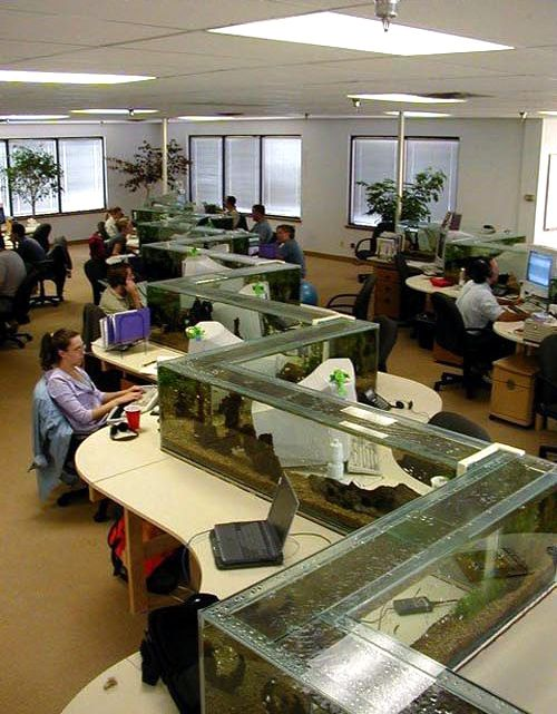 cool office space ideas. funny pictures about epic office fish tank oh and cool pics also photos space ideas