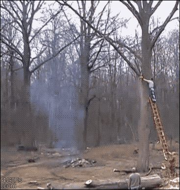 WHY I LOST MY JOB SERIES - TREE TRIMMER CHAINSAWS LARGE BRANCH THAT FALLS AND KNOCKS HIM OFF LADDER - SCARY ACTION GIF!