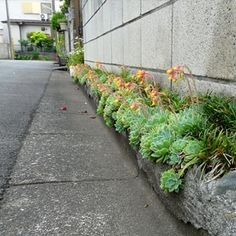 (notitle) – Landscaping
