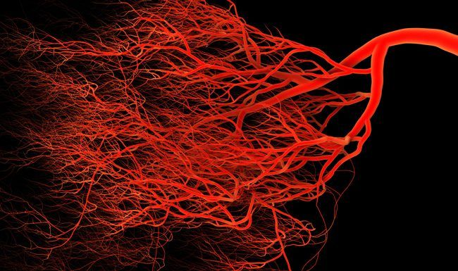 Macrophages, The Little Helpers That Heal Broken Blood Vessels | Asian Scientist Magazine | Science, Technology and Medicine News Updates From Asia