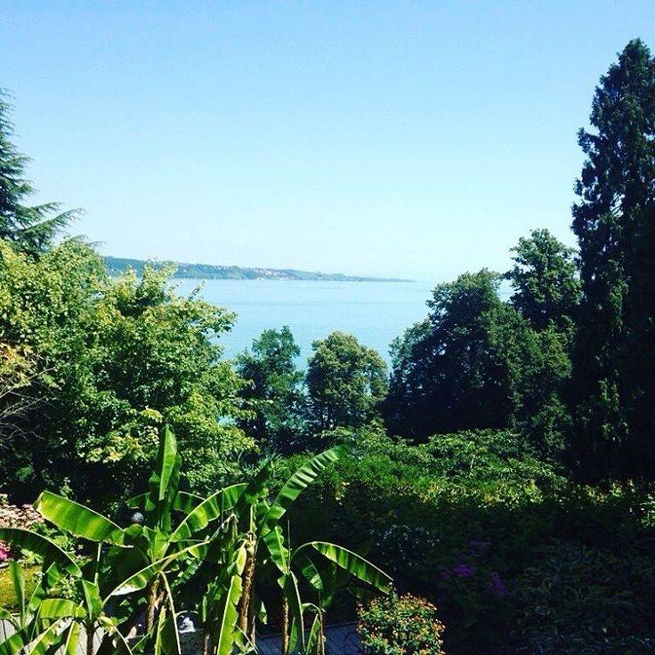 Highlight am Bodensee. Dazu tolles Wetter letzten Sommer. Nicht das letzte Mal – ganz bestimmt. #inselmainau #mainau #sommer #sonne #natur #see #bodensee #lakekonstanz #lakeconstance
