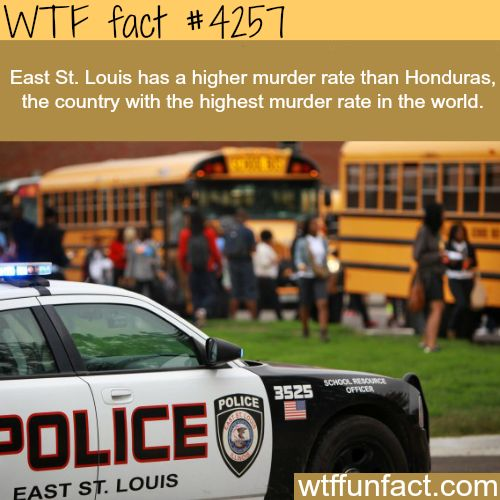 The murder rate in East St. Louis -  WTF fun facts