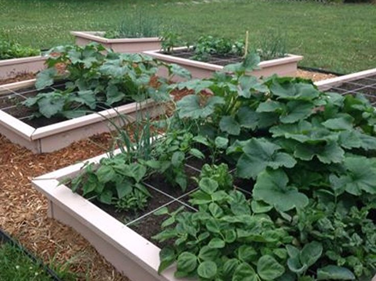 1000 Images About Gardening On Pinterest Raised Beds