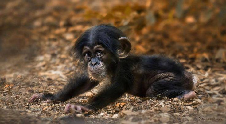 20 bébés animaux trop mignons | Buzzly