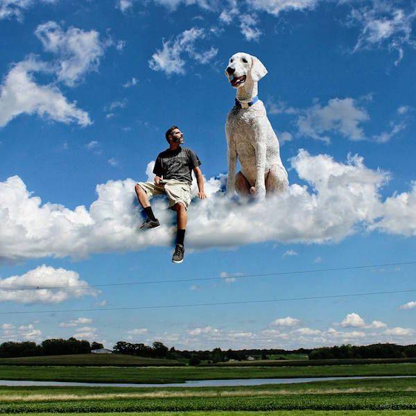 #Dog #Goldendoodle #Animal #Photography #Photoshop #omg #cute