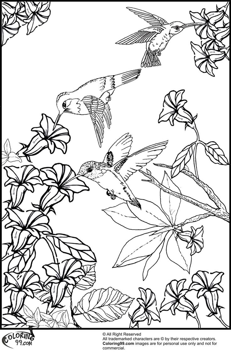 104 best Coloring pages images on Pinterest | Tattoo ideas, Birds ...