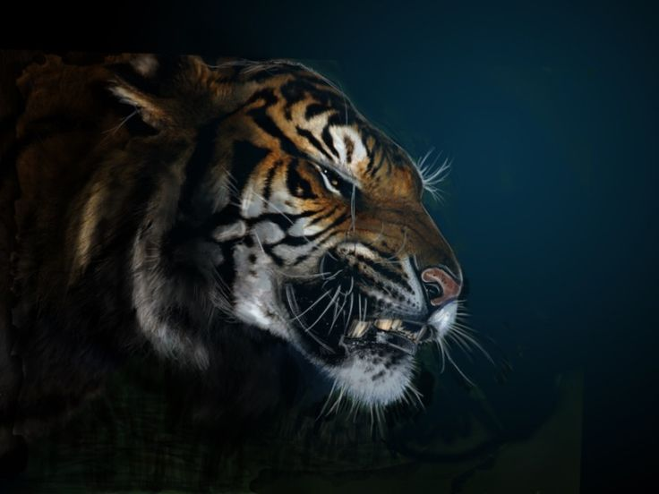 3d wallpapers hd animals - photo #41