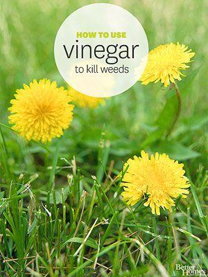 Vinegar as Weed Killer