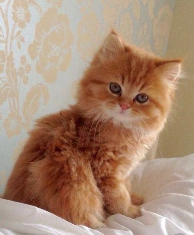 Pin By Linda Kortright On Kittens Cats 2 Cutest Animals On