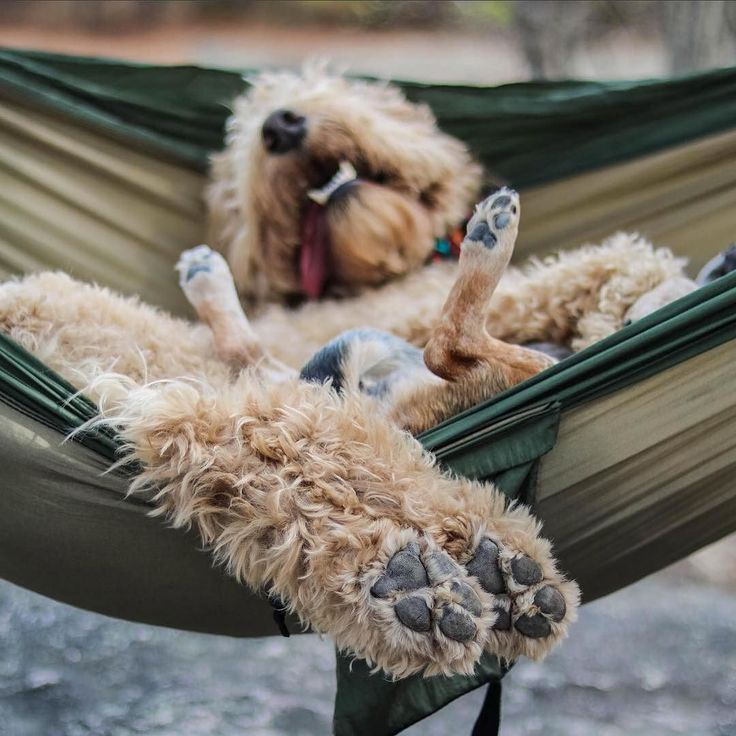 Doing Sunday right. Dogs  hammocks  mountaintops... it just doesn't get much better. Thanks to @lunathewonderbeagle and her best bud @indythegoldendoodle for sharing their Sunday adventures at Arabia Mountain and hope everyone is out enjoying this perfect spring Sunday too. #atlantatrails