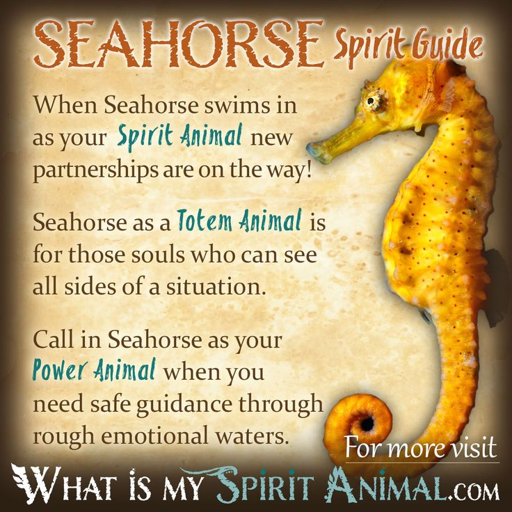 In-depth Seahorse Symbolism & Seahorse Meaning! Seahorse as a Spirit, Totem…