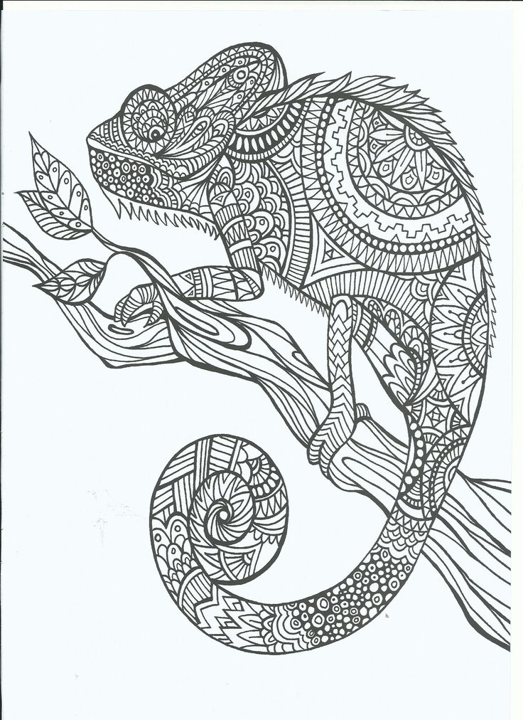 line art doodle zentangle adult coloring page - Chameleon Coloring Pages Printable