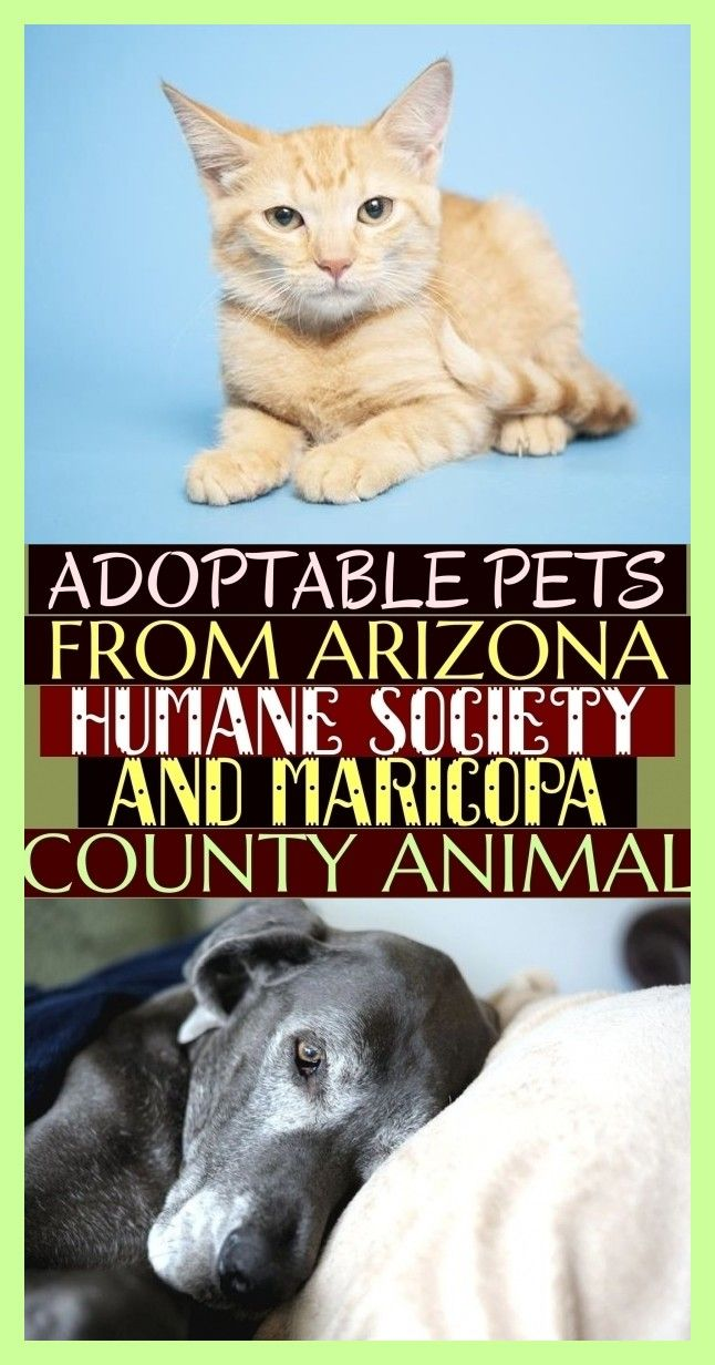 More Than 72 Adoptable Pets From Arizona Humane Society And