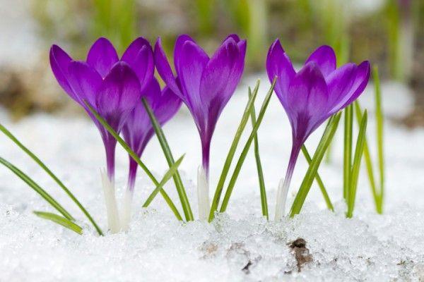 Risultati immagini per fiori invernali