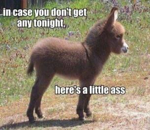 ...little ass..: