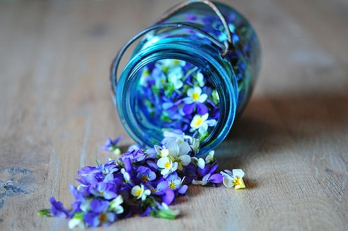 White Flower, Flower Jars, Little Flower, Violets, Hanging Flower, Blue Flower, Bottle, Mason Jars, Purple Flower