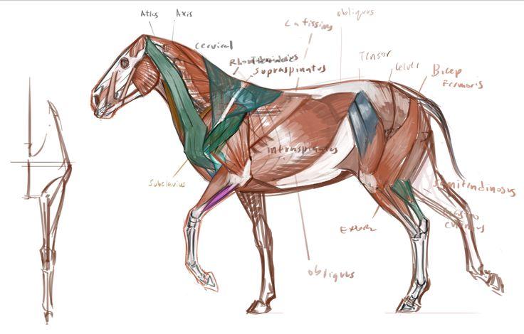 Bok med anatomi:: Dyr. HEST/ LØVE/ HUND/
