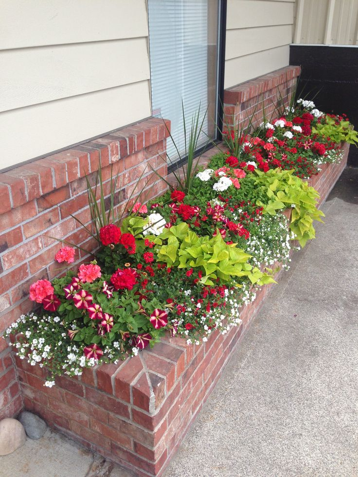 Garden beds white bacopa salmon geraniums red geraniums for Green plants for flower beds
