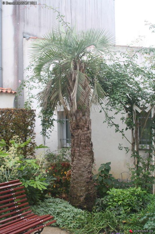 jardin des plantes du mus um de la rochelle palmiers. Black Bedroom Furniture Sets. Home Design Ideas