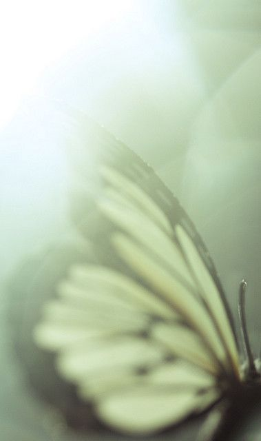 Like a flutter of wings upon your heart. A dance of hope with which there is no desire to part.