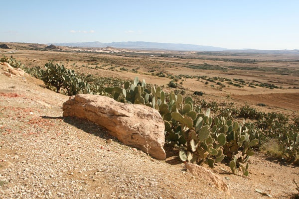 Tunisia - Desert Landscape