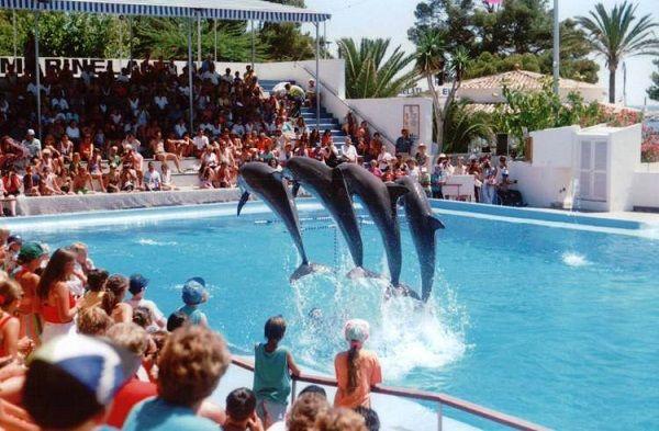 Что творится за кулисами шоу с дельфинами. Шокирующая правда, раскрывающая глаза…
