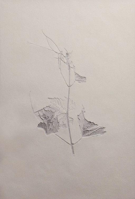Vitis Silvestris (Giovani foglie) 2013 carta pergamena bianca incisa a mano cm. 28,5 x 19