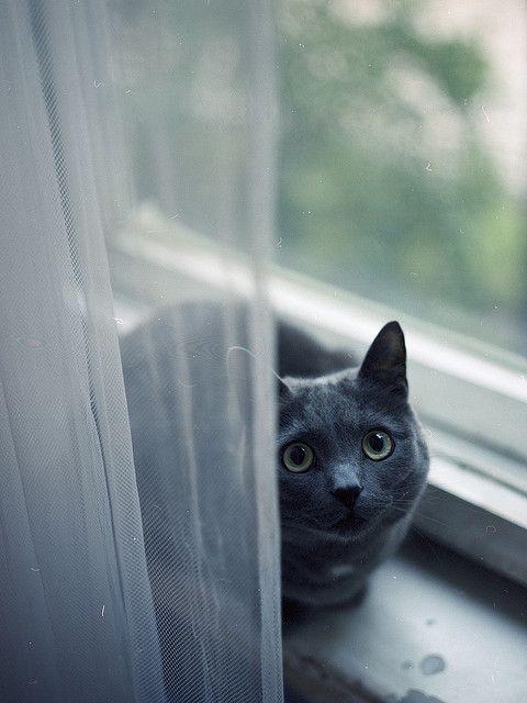 """Cats are endless opportunities for revelation."" --Leslie Kapp"