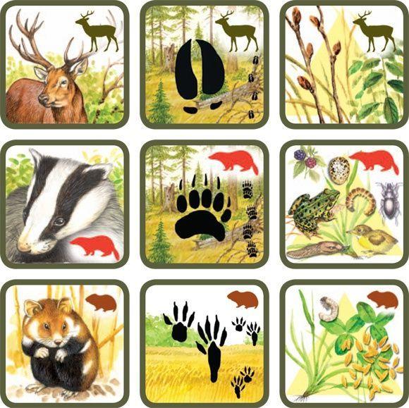 Natuurspel voor kleuters, zoek het dier bij zijn sporen en voedsel no.5, free printable